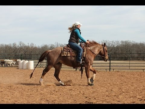 Talk That Cash - 2010 Red Roan AQHA Mare For Sale