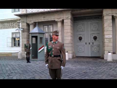 Dog attacks Hungarian Army