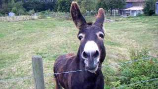 Play Oscar The Donkey Who Cries Like A Baby