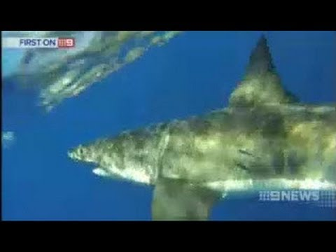 Fishermen capture great white shark on camera