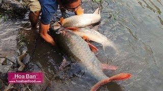 Cá khủng ở Sông Đà