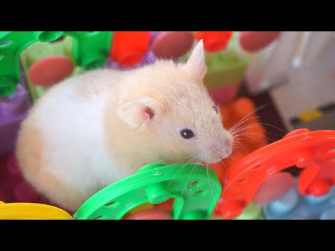 My Funny Pet Hamster in Lego Obstacle Course – Escape from the Castle!
