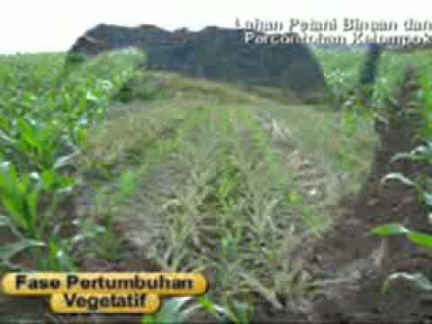 Bio P 2000 Z di tanah Batak (TAPUT) - 3