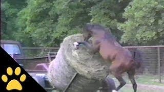 Caballos, ponies y caídas