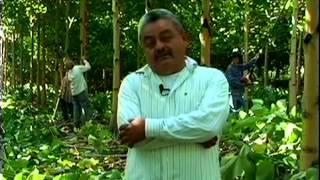 Vivir de la sustentabilidad del bosque