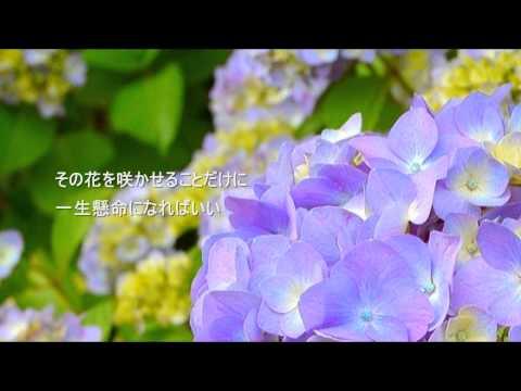 Bông hoa duy nhất trên thế giới (山本潤子  世界に一つだけの花)