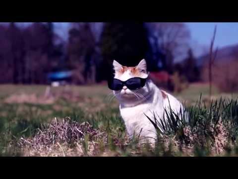 [MV] Shironeko - Phương Mỹ Chi _ Ru lại câu hò
