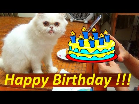 Happy Birthday My Cat 2 Year Old  |Funny Video Cat 2017 | Meo Cover Home