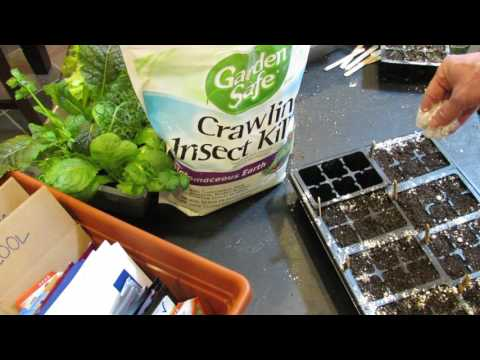 How to Use Diatomaceous Earth for Fungus Gnats and Crawling Insects: Seed Starts &  More