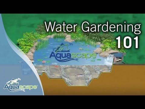 Water Gardening 101