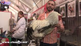 طريف..في رواق الحيوانات بمعرض الفلاحة بمكناس..دجاجة |