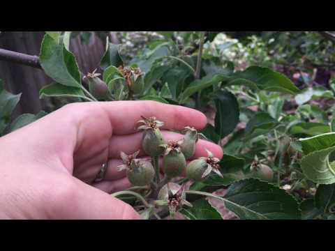 Permaculture Orchard Tour Part 2:  2nd Half of the Poultry Run