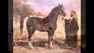 فلم عن الخيل والحصان العربي الاصيل