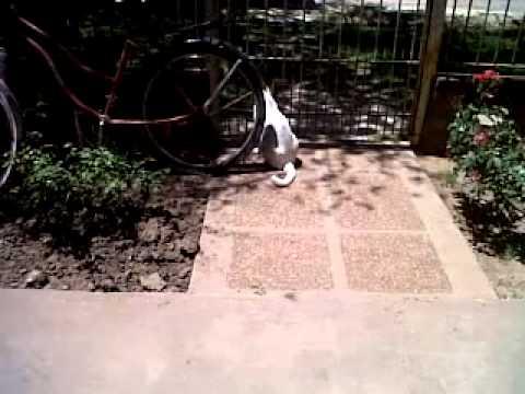 Gatito llora cuando su dueña se va