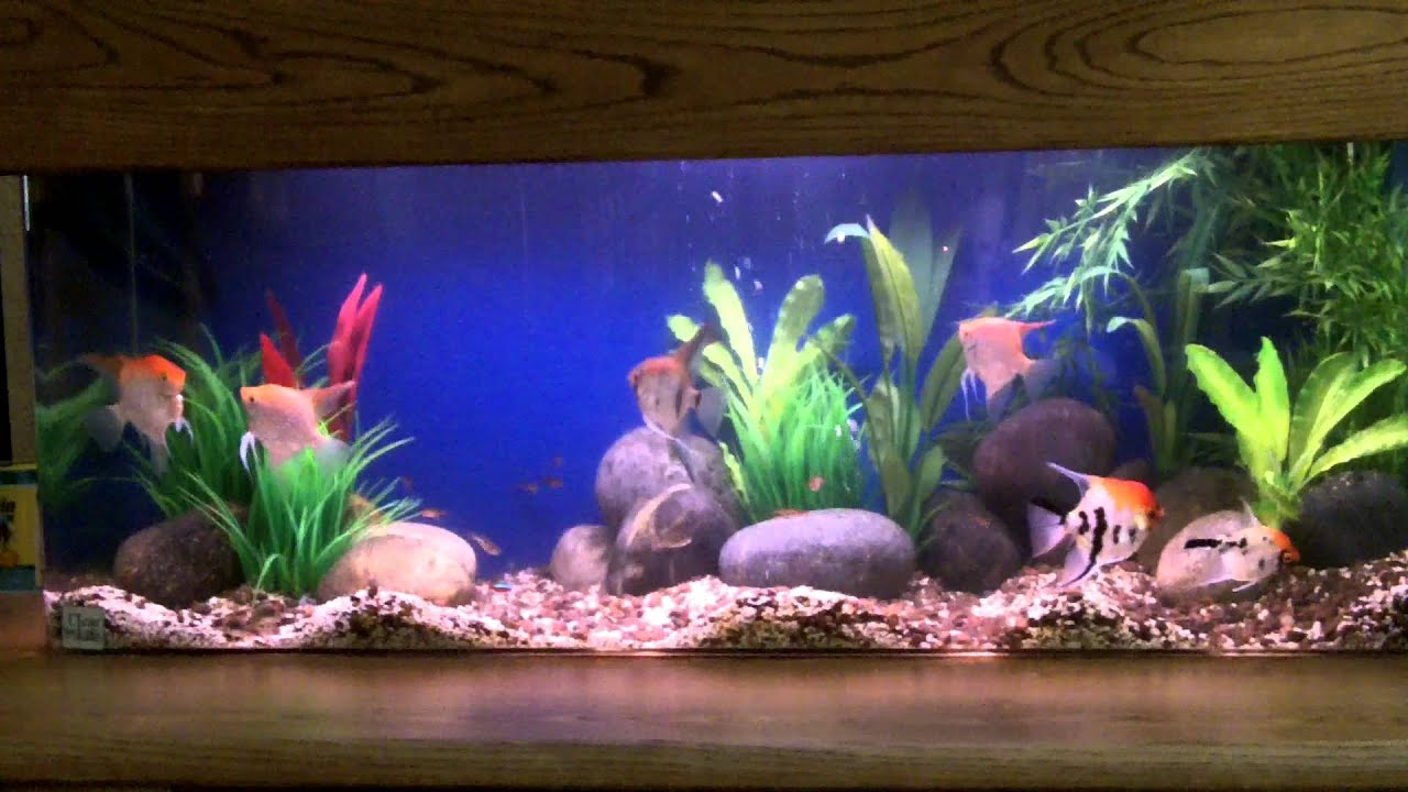 aquarium fish videos youtube saltwater aquarium tropical ForYoutube Fish Tank