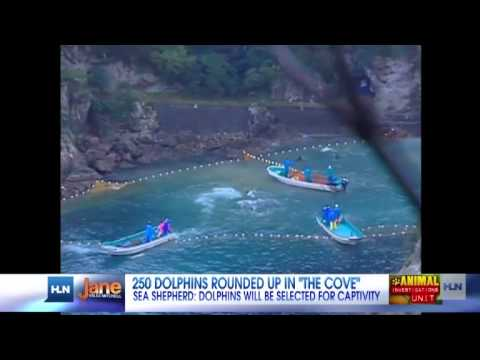 Group: 250 dolphins await slaughter, lifetime of captivity at Japan's Taiji Cove