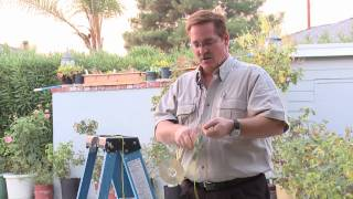 Home & Lawn Pest Control : How To Scare Away Birds With