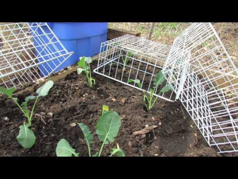 Protect Your Garden Greens & Plants from Rabbits: Thrift Store Shopping!