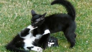 Kitten Fight Club