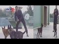 Lovable Video Of MS Dhoni Playing With His Dogs..