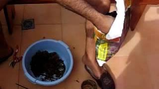 Trasplantar orquideas a una maceta