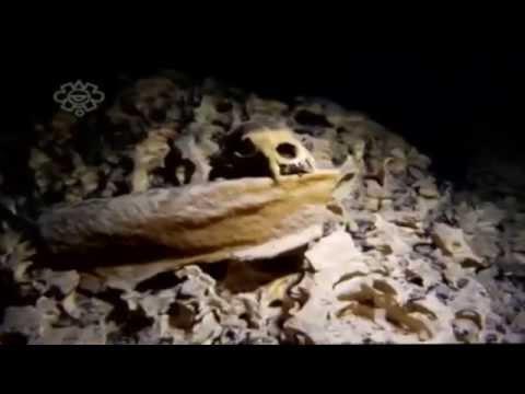 INAH Descubre  esqueleto más antiguo de América