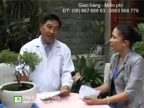 Bán Rể Đinh Lăng - Cây Thuốc Nam