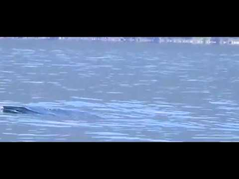video anaconda lago colico stab