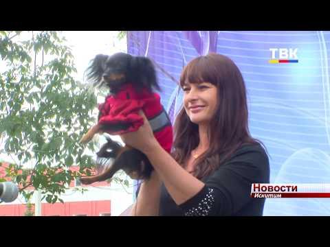 В Искитиме дефилировали собаки на конкурсе «Хвостатые модники»