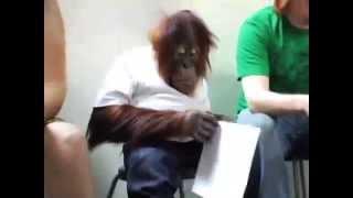 El mono más inteligente del mundo