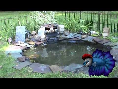 for Koi pond setup