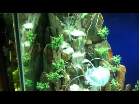 Hồ giả thủy sinh-Hồ cá kiểng Đại Dương