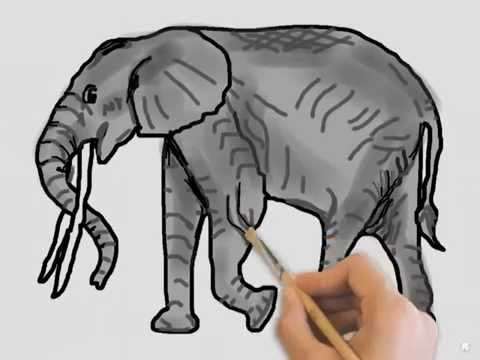 Forest Elephant Drawing African Forest Elephant