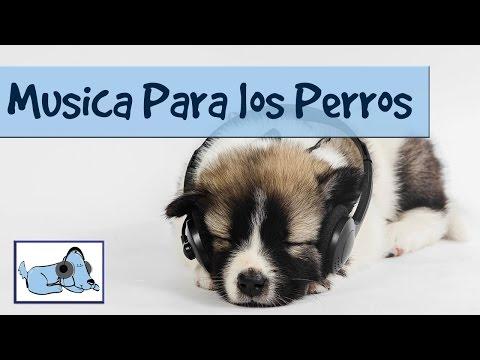 Música para los perros. Ayude a su perro o cachorro a relajarse con la música.