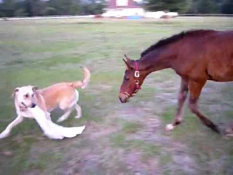 Baby Horse And Dog Play Together