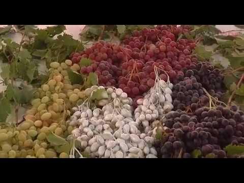 شهد.. بيت تعبئة وتسويق العنب والفواكه