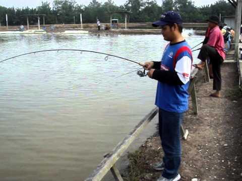 memancing siakap besar