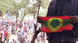 Qeerroon Bilisummaa Falmaa Itti Fufna! Wallee Haarawaa/Qabsaawa Oromoo Irraa