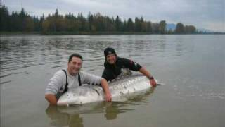10ft Monster Sturgeon, Huge Fish Caught By Nick & George
