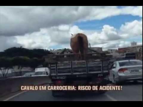 Caminhão carrega cavalo desprotegido e causa risco de acidentes na Lagoinha
