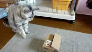 貯金箱とネコ