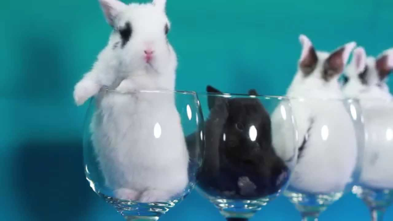 Bunnies In Wine Glasses
