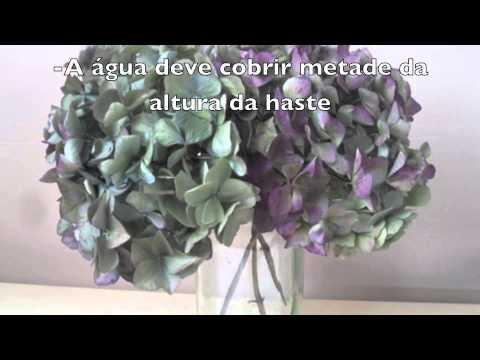 Hortênsias para decoração-Secagem