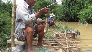 Câu cá giải trí - câu cá trê - sát thủ câu cá trê suối