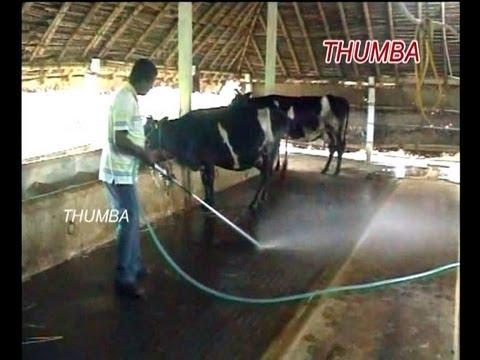 Dairy farming business plan