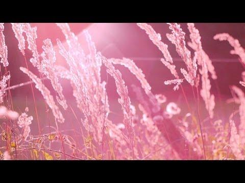 Música romantica instrumental - música relajante de fondo