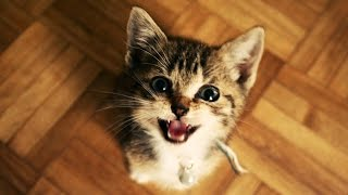 Funny Cats and Kittens Meowing Compilation Part 2
