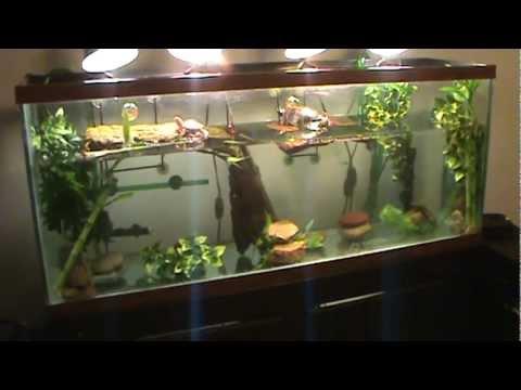 New 55 Gallon Turtle Tank - YouTube