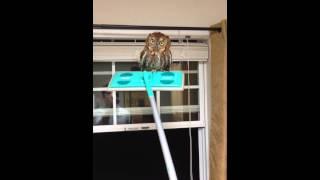 The Owl Whisperer