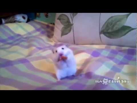 Śmieszne zwierzęta :D Funny Animals